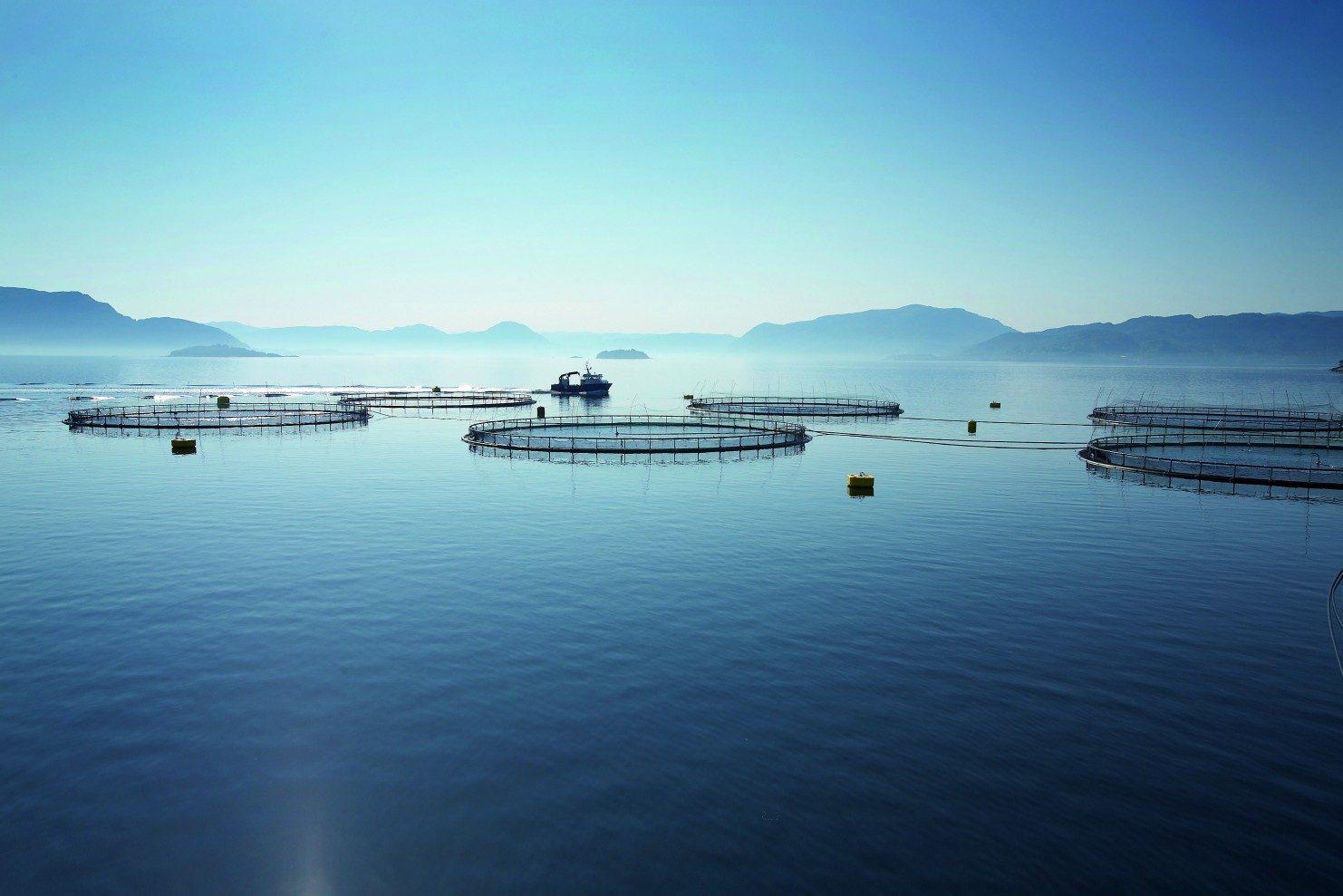 Aquculture products.